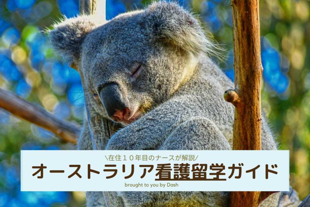 Sleeping Koala on the Tree